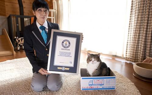 日本小猫夺Youtube人气冠军
